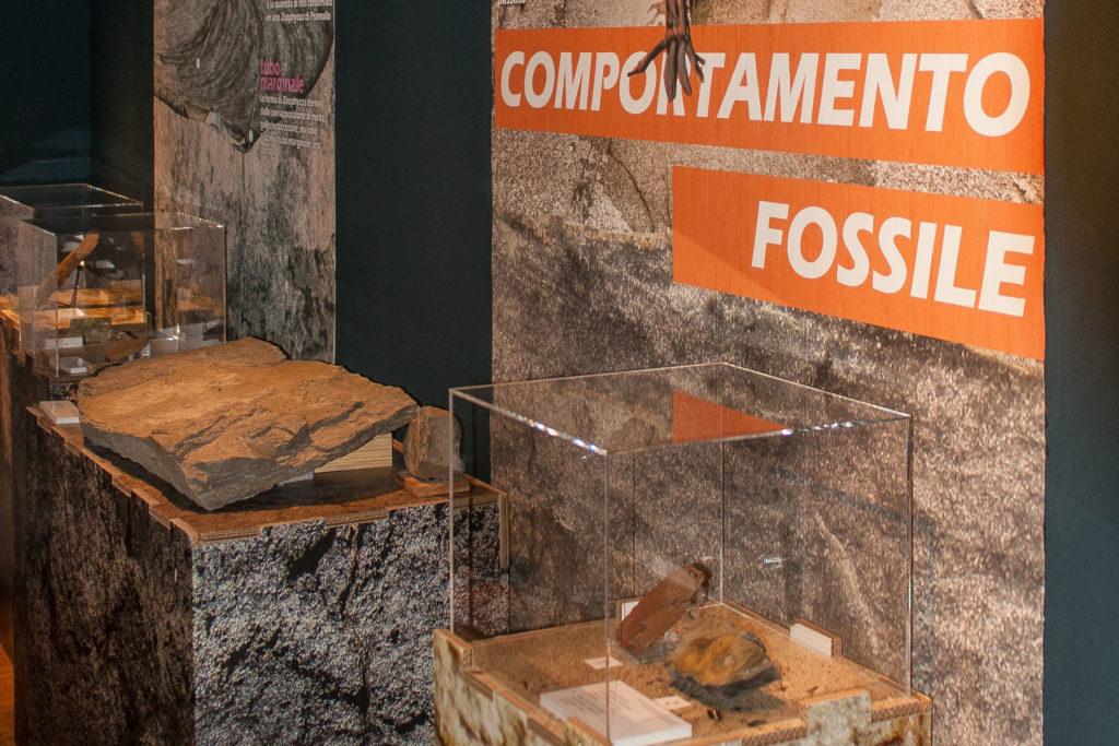 Mostra Geopaleontologica – Pontebba